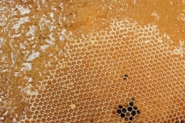 Kendala-kendala Yang Dihadapi Peternak Lebah Madu