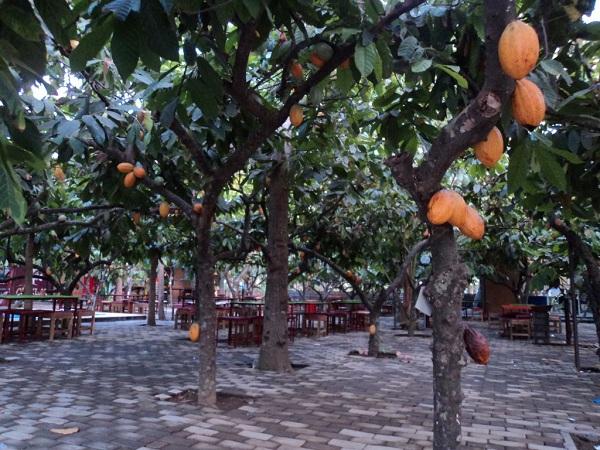Produk Olahan Kakao Kampung Coklat Blitar