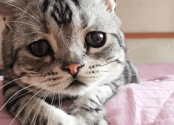 Tanda Kucing Sakit Dilihat dari Area Tubuh