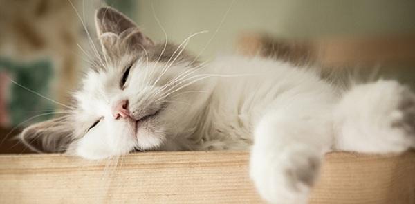 Tanda Kucing Sakit dari Perilaku yang Ditunjukkan