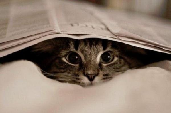 Ciri-ciri Kucing Cacingan