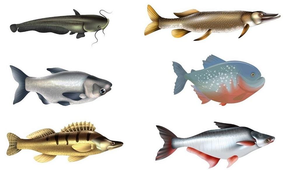 Jenis Ikan Air Tawar