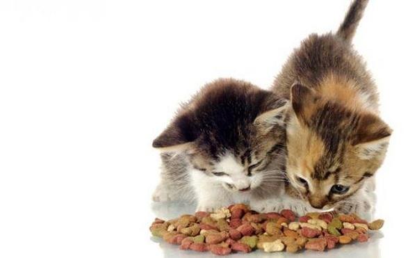 Nafsu Makan Kucing Meningkat