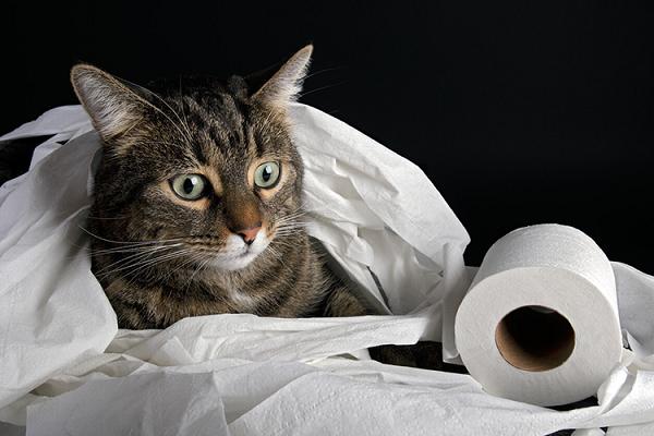 Penyebab Kucing Mencret