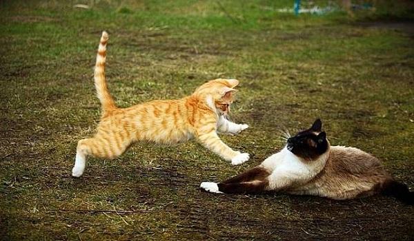 Sensitif dengan Kucing Lain