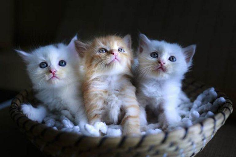 10 Cara Merawat Anak Kucing Yang Baru Lahir   Republik SEO