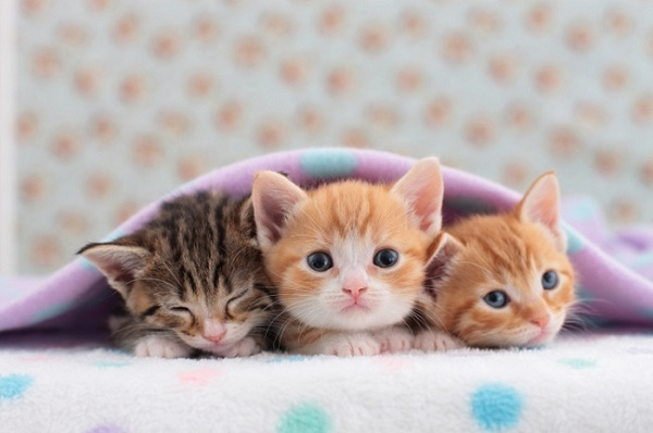 Cara Merawat Anak Kucing Dengan Baik Dan Benar