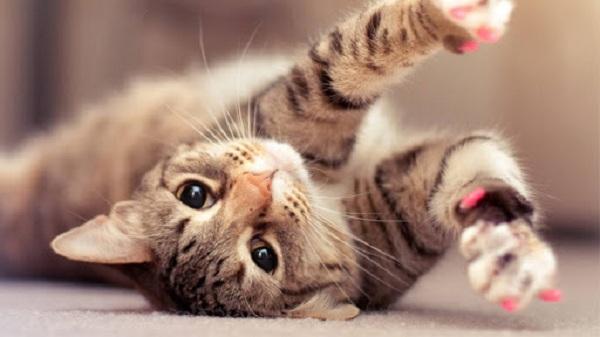 Cara Merawat Kucing Cacingan
