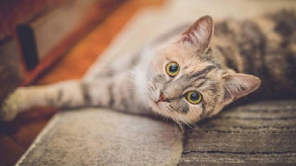 Ciri-ciri Kucing Sakit Mata