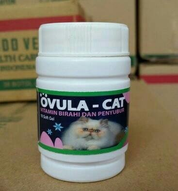 Ovula Cat