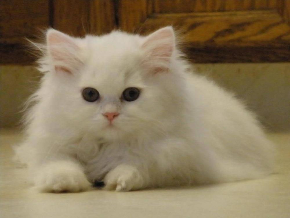 Vitamin Kucing Terbaik Agar Sehat dan Gemuk