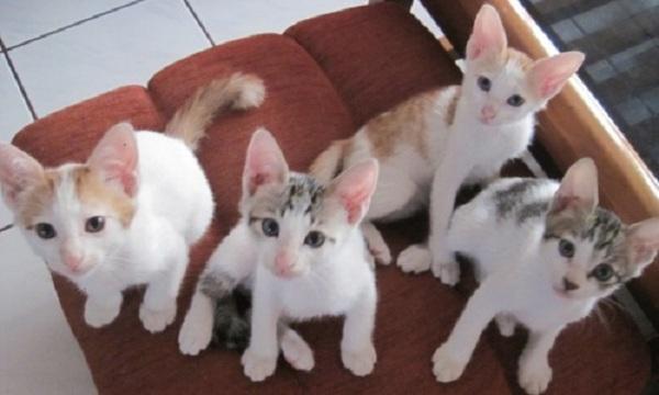 Kucing Kampung Jenis Harga Cara Merawat Republik Seo