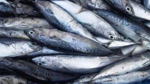 Ikan Kayu Aceh