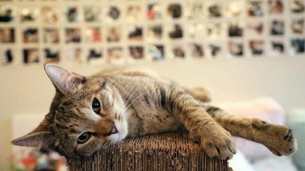 Kucing Muntah