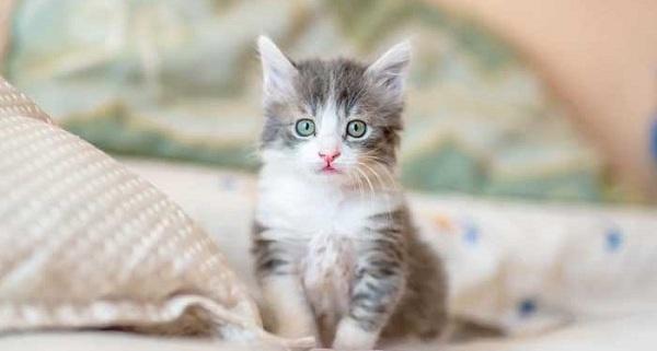 Tips Memilih Produk Pembasmi Kutu Kucing