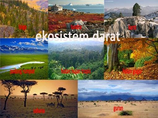 Jenis-Jenis Ekosistem Darat