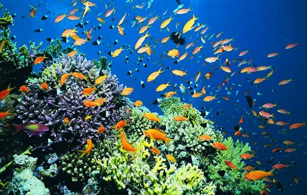 Jenis-jenis Ekosistem Air