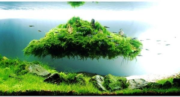 Jenis Ikan yang Tak Cocok Aquascape