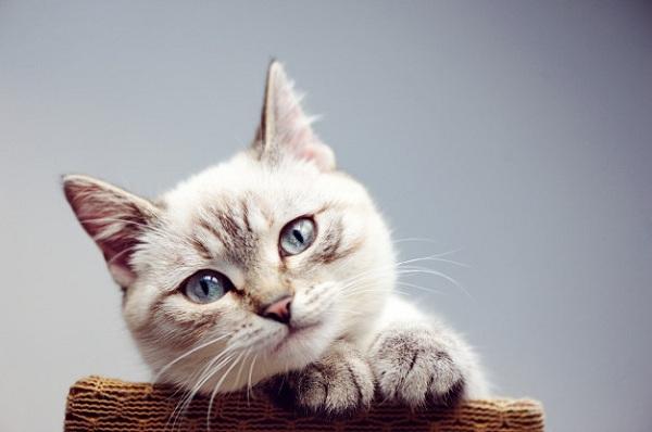 Menjaga Kesehatan Kucing Anda
