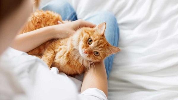Obat untuk Kucing Demam