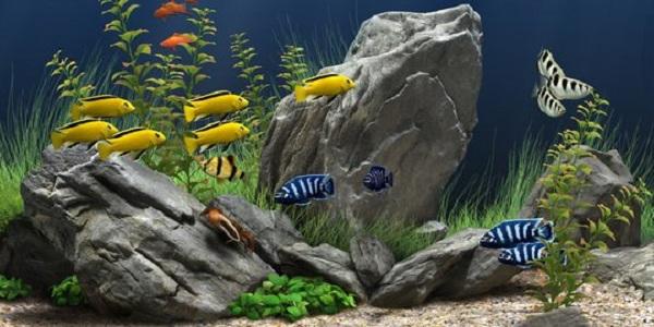 Pengertian dan Kriteria Ikan Aquascape