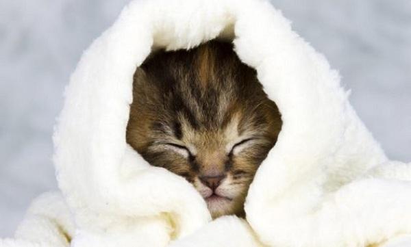 Penyebab Kucing Demam
